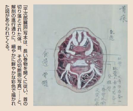 『平次郎臓図』写本は、長い巻物を開くに従い、首の切り落とされた体、首、その切断面(写真)……と、解剖の進行通りに、細やかに鮮やかな彩色で描かれた図があらわれてくる。